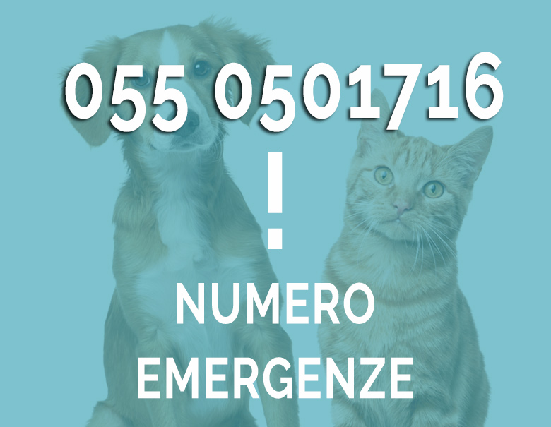 Chiamate emergenza Veterinario San Bartolo