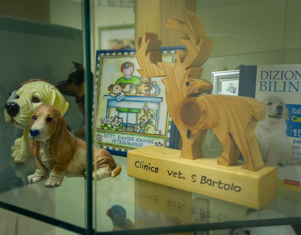 Ambulatorio Veterinario San Bartolo, Firenze